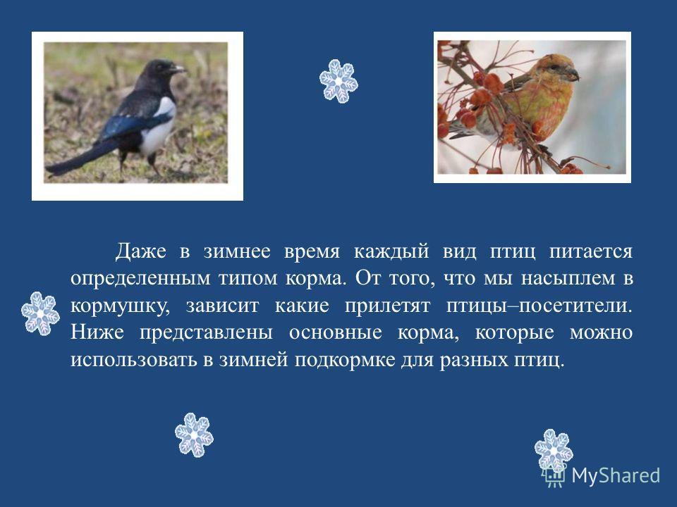 Даже в зимнее время каждый вид птиц питается определенным типом корма. От того, что мы насыплем в кормушку, зависит какие прилетят птицы–посетители. Ниже представлены основные корма, которые можно использовать в зимней подкормке для разных птиц.