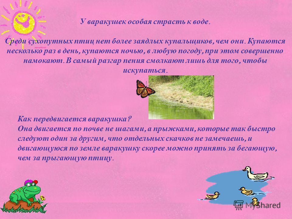 Как передвигается варакушка ? Она двигается по почве не шагами, а прыжками, которые так быстро следуют один за другим, что отдельных скачков не замечаешь, и двигающуюся по земле варакушку скорее можно принять за бегающую, чем за прыгающую птицу. У ва