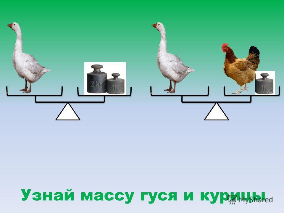 Узнай массу гуся и курицы