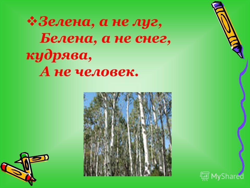 Зелена, а не луг, Белена, а не снег, кудрява, А не человек.