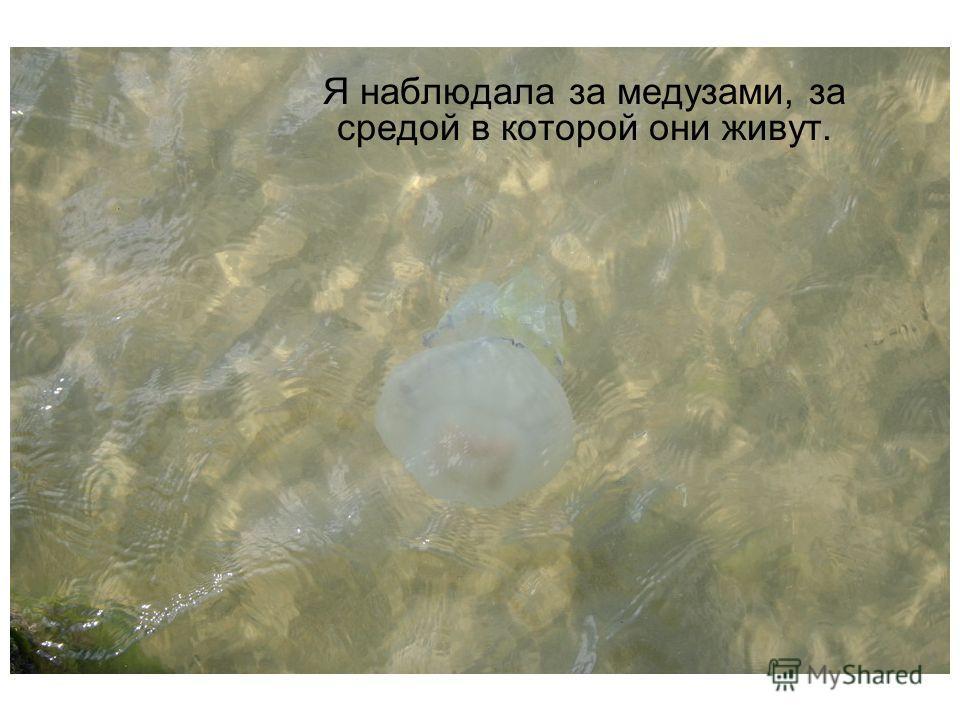 Я наблюдала за медузами, за средой в которой они живут.