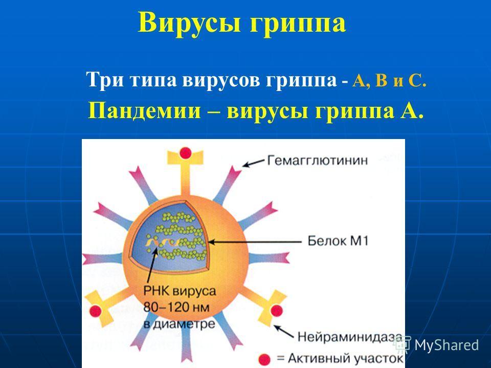 Вирусы гриппа Три типа вирусов гриппа - A, B и C. Пандемии – вирусы гриппа А.