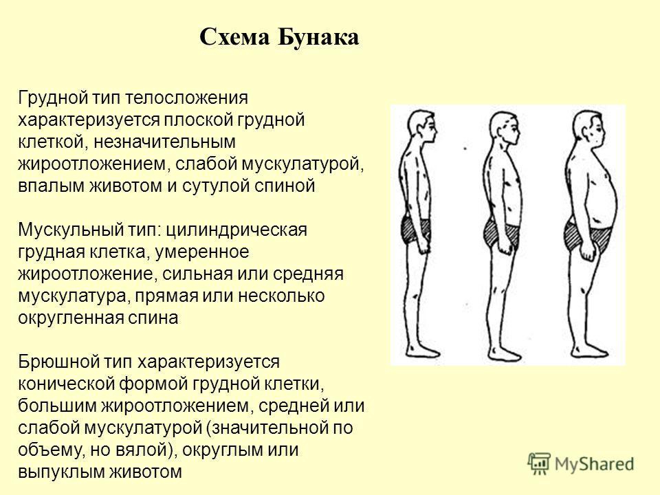 Схема Бунака Грудной тип телосложения характеризуется плоской грудной клеткой, незначительным жироотложением, слабой мускулатурой, впалым животом и сутулой спиной Мускульный тип: цилиндрическая грудная клетка, умеренное жироотложение, сильная или сре