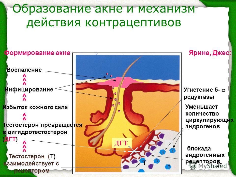 27 Образование акне и механизм действия контрацептивов Тестостерон (Т) взаимодействует с рецептором Т Т Т Т ДГТ блокада андрогенных рецепторов Угнетение 5- редуктазы Т Уменьшает количество циркулирующих андрогенов Ярина, Джес: Тестостерон превращаетс