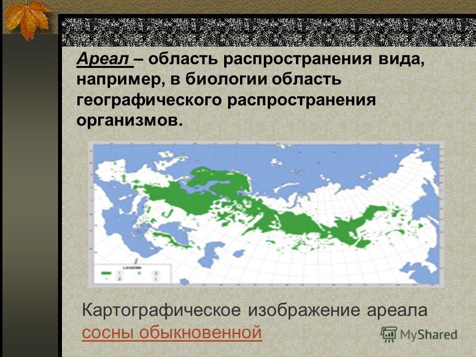Ареал – область распространения вида, например, в биологии область географического распространения организмов. Картографическое изображение ареала сосны обыкновенной сосны обыкновенной