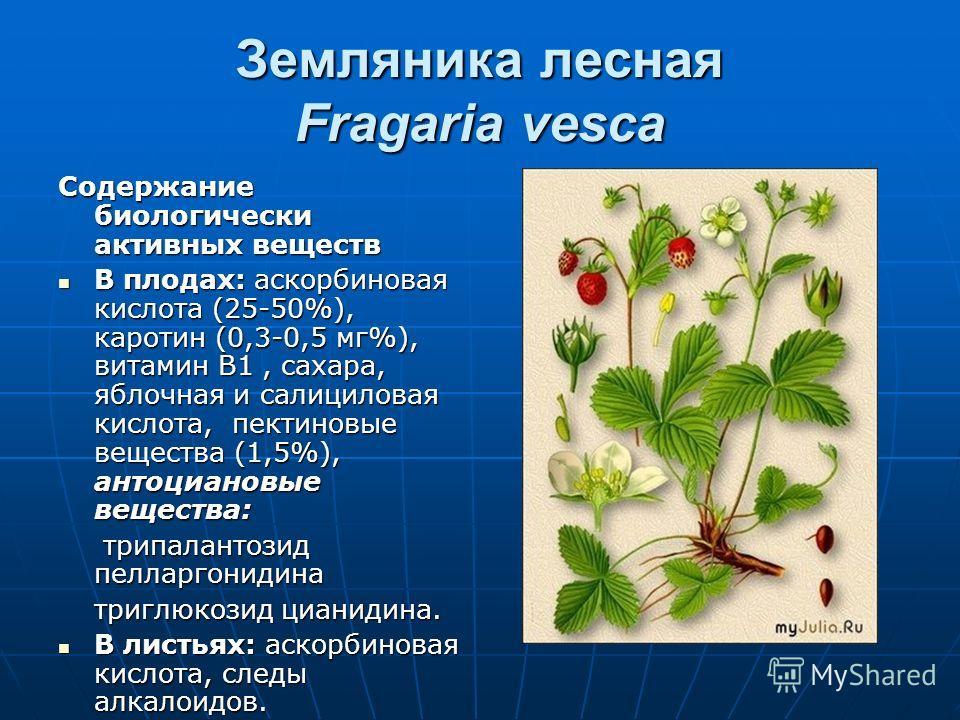 Земляника лесная Fragaria vesca Содержание биологически активных веществ В плодах: аскорбиновая кислота (25-50%), каротин (0,3-0,5 мг%), витамин В1, с