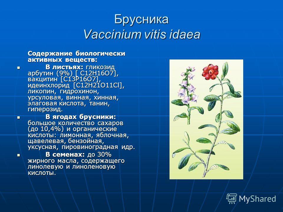 Брусника Vaccinium vitis idaea Содержание биологически активных веществ: В листьях: гликозид арбутин (9%) [ C12H16O7], вакцитин [C13P16O7], идеинхлорид [C12H21O11Cl], ликопин, гидрохинон, урсуловая, винная, хинная, элаговая кислота, танин, гиперозид.
