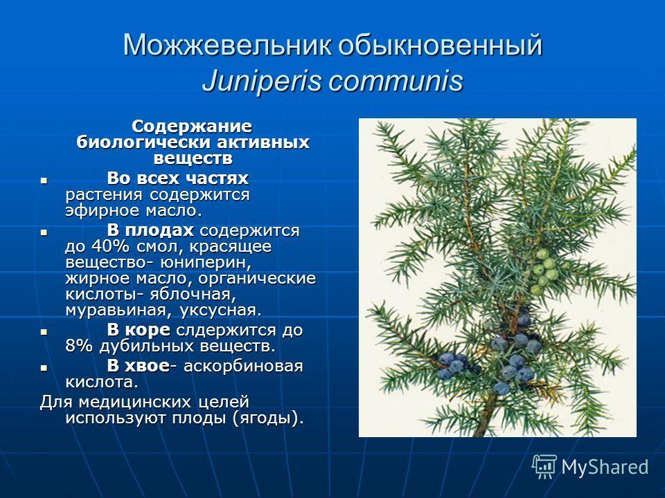 Можжевельник обыкновенный Juniperis communis Содержание биологически активных веществ Содержание биологически активных веществ Во всех частях растения содержится эфирное масло. Во всех частях растения содержится эфирное масло. В плодах содержится до