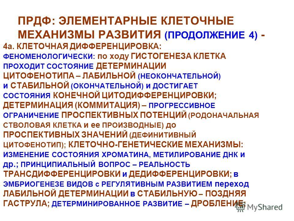 ПРДФ: ЭЛЕМЕНТАРНЫЕ КЛЕТОЧНЫЕ МЕХАНИЗМЫ РАЗВИТИЯ (ПРОДОЛЖЕНИЕ 4) - 4а. КЛЕТОЧНАЯ ДИФФЕРЕНЦИРОВКА: ФЕНОМЕНОЛОГИЧЕСКИ: по ходу ГИСТОГЕНЕЗА КЛЕТКА ПРОХОДИТ СОСТОЯНИЕ ДЕТЕРМИНАЦИИ ЦИТОФЕНОТИПА – ЛАБИЛЬНОЙ (НЕОКОНЧАТЕЛЬНОЙ) и СТАБИЛЬНОЙ (ОКОНЧАТЕЛЬНОЙ) и Д