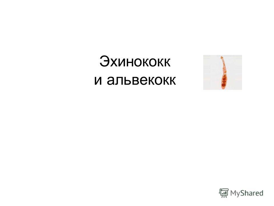 Эхинококк и альвекокк
