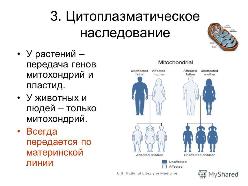 3. Цитоплазматическое наследование У растений – передача генов митохондрий и пластид. У животных и людей – только митохондрий. Всегда передается по материнской линии