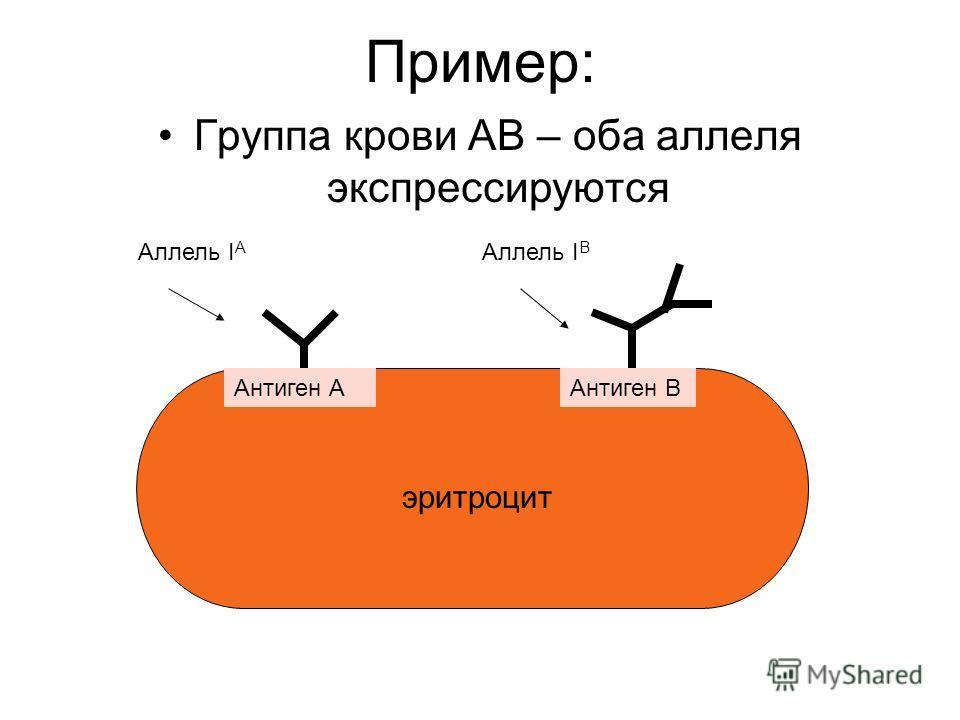 Пример: Группа крови АВ – оба аллеля экспрессируются эритроцит Антиген ААнтиген В Аллель I А Аллель I В