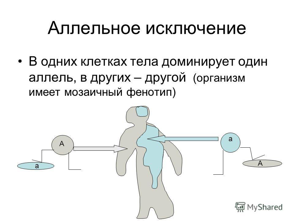 Аллельное исключение В одних клетках тела доминирует один аллель, в других – другой. (организм имеет мозаичный фенотип) А а а А