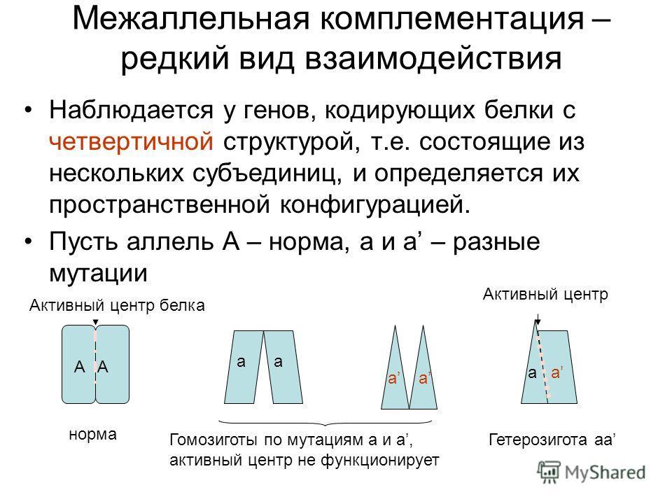 Межаллельная комплементация – редкий вид взаимодействия Наблюдается у генов, кодирующих белки с четвертичной структурой, т.е. состоящие из нескольких субъединиц, и определяется их пространственной конфигурацией. Пусть аллель А – норма, а и а – разные