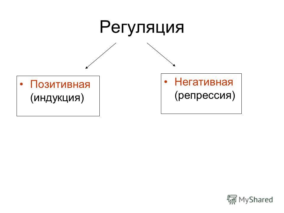 Регуляция Позитивная (индукция) Негативная (репрессия)