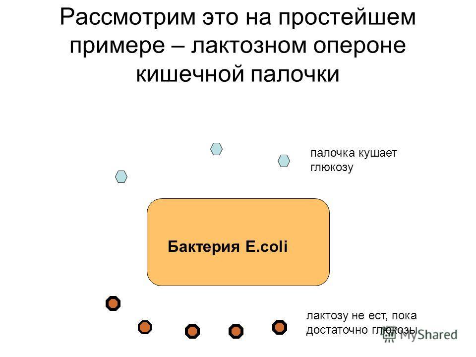 Рассмотрим это на простейшем примере – лактозном опероне кишечной палочки Бактерия E.coli палочка кушает глюкозу лактозу не ест, пока достаточно глюкозы