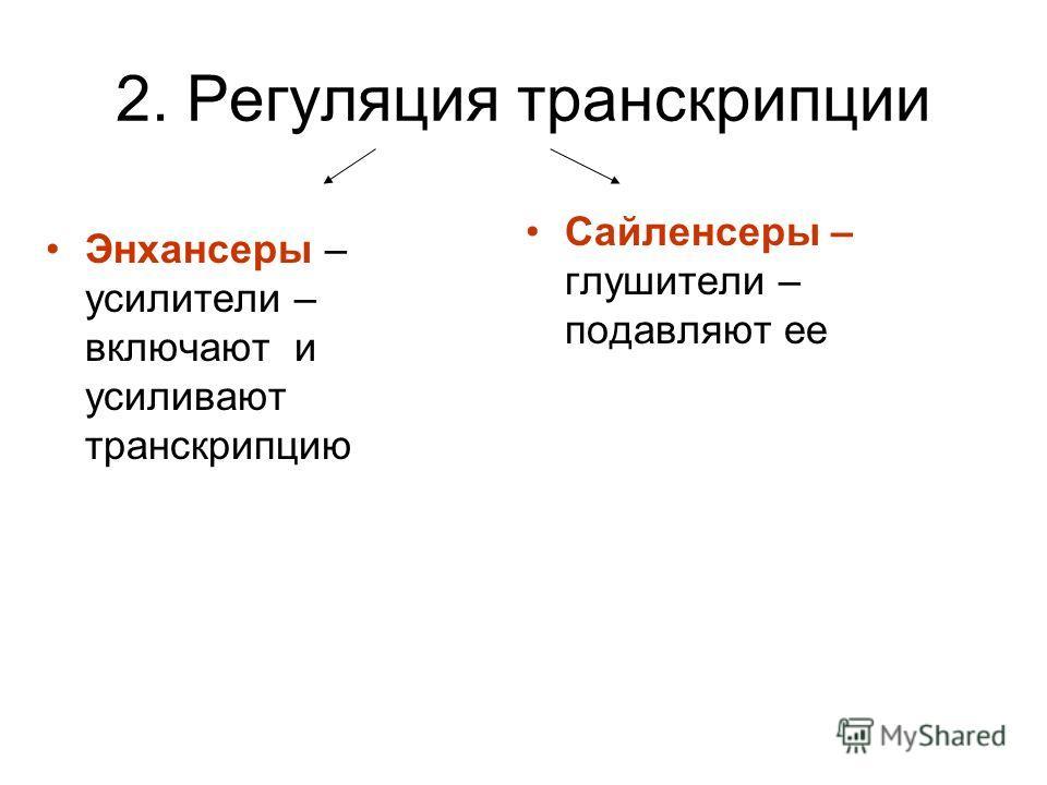 2. Регуляция транскрипции Энхансеры – усилители – включают и усиливают транскрипцию Сайленсеры – глушители – подавляют ее