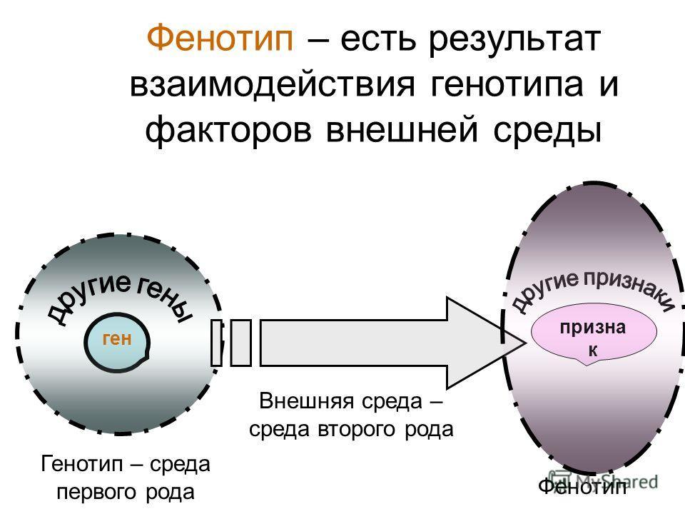 Фенотип – есть результат взаимодействия генотипа и факторов внешней среды ген Генотип – среда первого рода Внешняя среда – среда второго рода призна к Фенотип