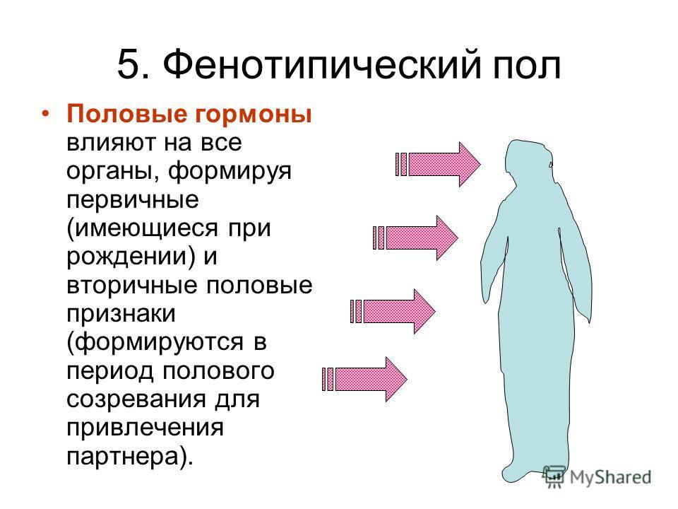 5. Фенотипический пол Половые гормоны влияют на все органы, формируя первичные (имеющиеся при рождении) и вторичные половые признаки (формируются в период полового созревания для привлечения партнера).