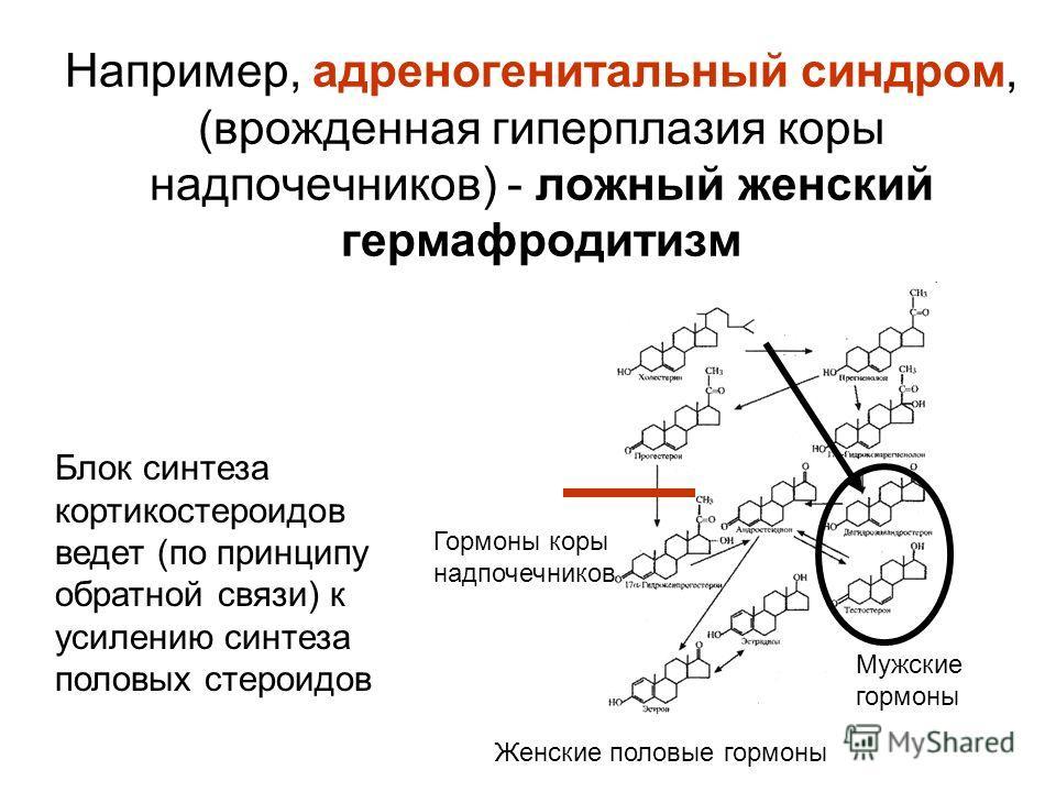 Например, адреногенитальный синдром, (врожденная гиперплазия коры надпочечников) - ложный женский гермафродитизм Женские половые гормоны Гормоны коры надпочечников Мужские гормоны Блок синтеза кортикостероидов ведет (по принципу обратной связи) к уси