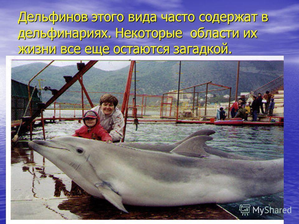 Дельфинов этого вида часто содержат в дельфинариях. Некоторые области их жизни все еще остаются загадкой.