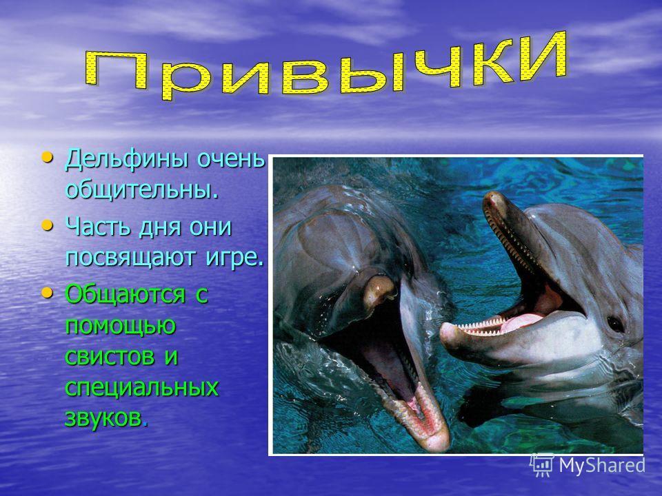 Дельфины очень общительны. Часть дня они посвящают игре. Общаются с помощью свистов и специальных звуков.