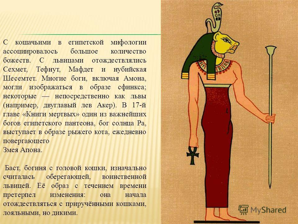 С кошачьими в египетской мифологии ассоциировалось большое количество божеств. С львицами отождествлялись Сехмет, Тефнут, Мафдет и нубийская Шесемтет. Многие боги, включая Амона, могли изображаться в образе сфинкса; некоторые непосредственно как львы