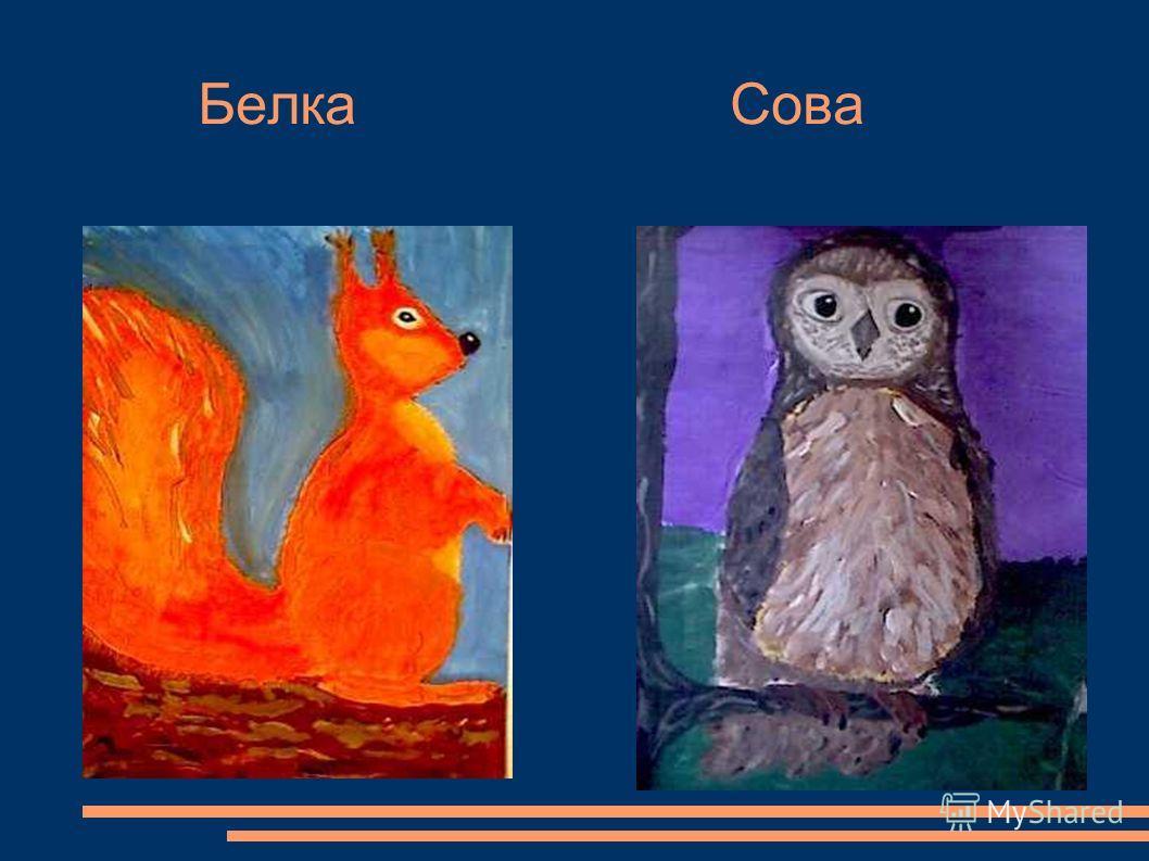 Белка Сова