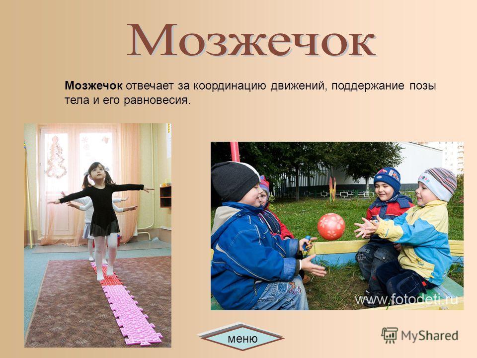 меню Мозжечок отвечает за координацию движений, поддержание позы тела и его равновесия.