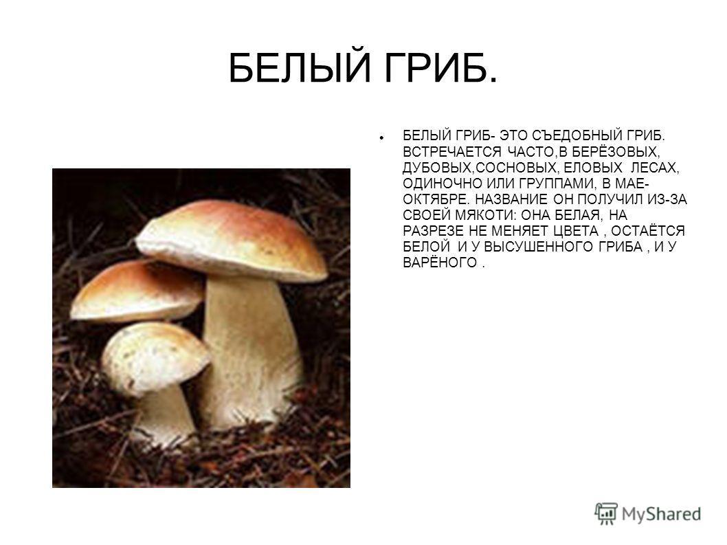 съедобные грибы в березовых посадках фото и название