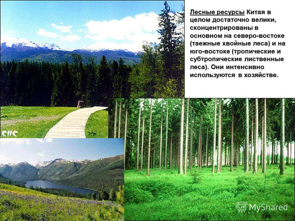 Лесные ресурсы Китая в целом достаточно велики, сконцентрированы в основном на северо-востоке (таежные хвойные леса) и на юго-востоке (тропические и субтропические лиственные леса). Они интенсивно используются в хозяйстве.