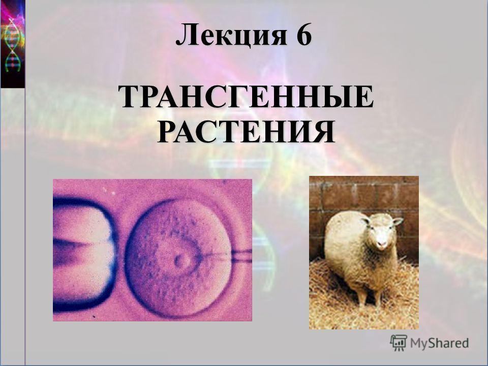Лекция 6 ТРАНСГЕННЫЕ РАСТЕНИЯ