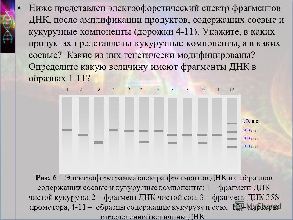 Рис. 6 – Электрофореграмма спектра фрагментов ДНК из образцов содержащих соевые и кукурузные компоненты: 1 – фрагмент ДНК чистой кукурузы, 2 – фрагмент ДНК чистой сои, 3 – фрагмент ДНК 35S промотора, 4-11 – образцы содержащие кукурузу и сою, 12 – мар