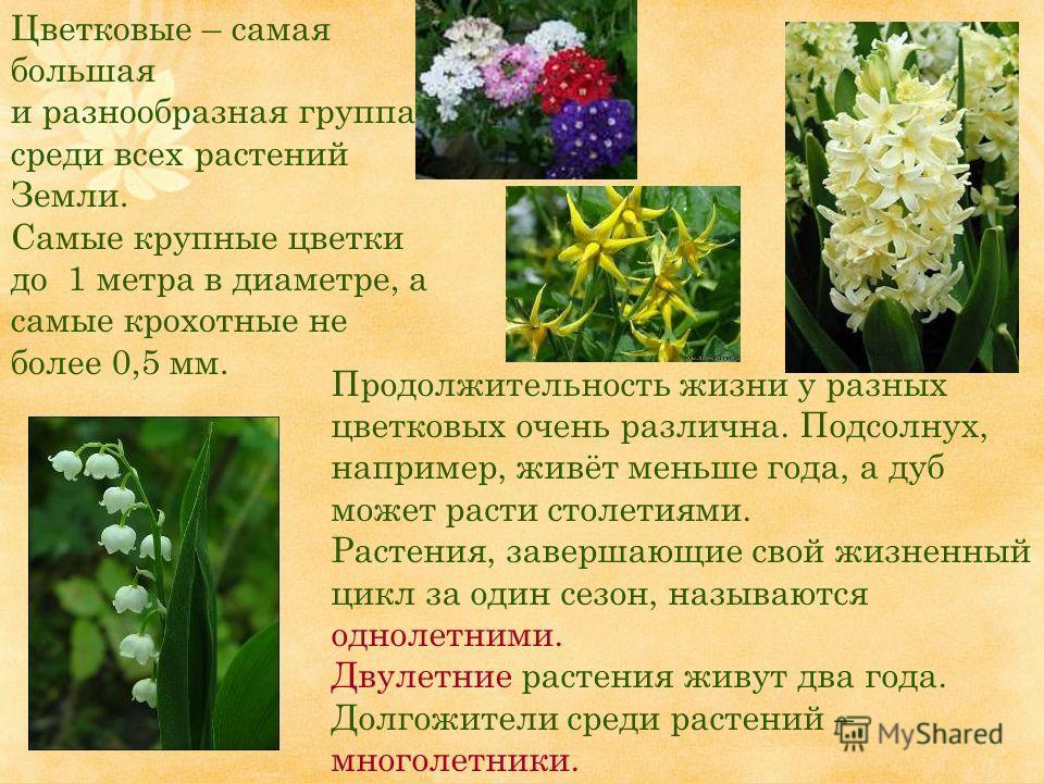 Продолжительность жизни у разных цветковых очень различна. Подсолнух, например, живёт меньше года, а дуб может расти столетиями. Растения, завершающие свой жизненный цикл за один сезон, называются однолетними. Двулетние растения живут два года. Долго