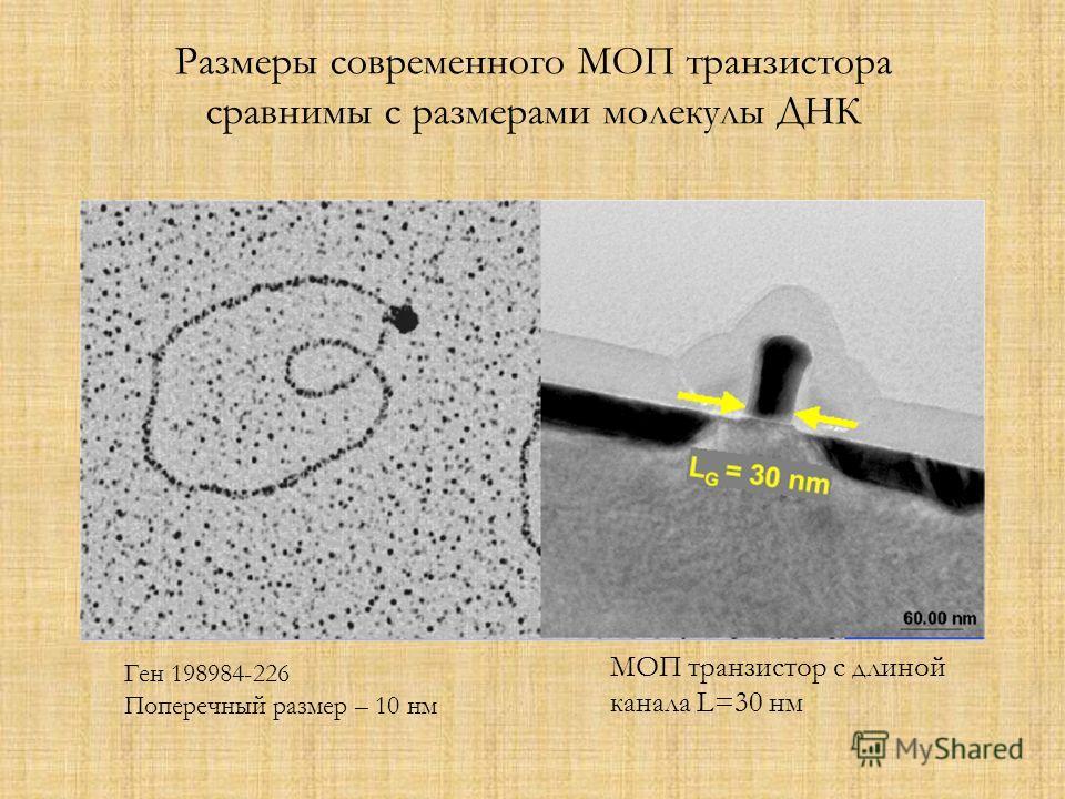 Размеры современного МОП транзистора сравнимы с размерами молекулы ДНК Ген 198984-226 Поперечный размер – 10 нм МОП транзистор с длиной канала L=30 нм