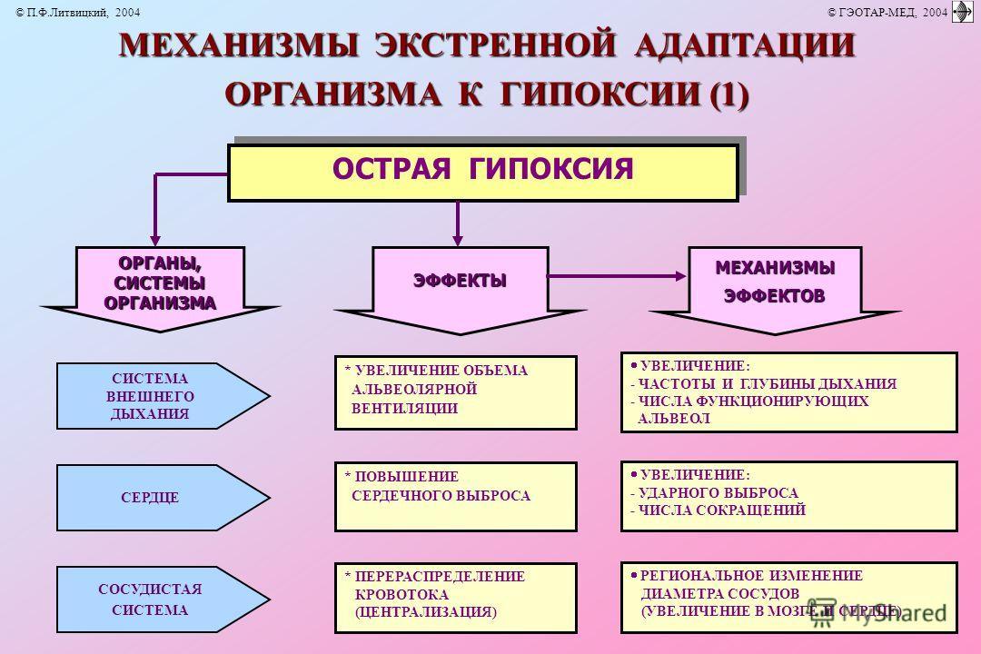 ОРГАНЫ,СИСТЕМЫОРГАНИЗМА МЕХАНИЗМЫ ЭКСТРЕННОЙ АДАПТАЦИИ ОРГАНИЗМА К ГИПОКСИИ (1) ОСТРАЯ ГИПОКСИЯ МЕХАНИЗМЫЭФФЕКТОВЭФФЕКТЫ * УВЕЛИЧЕНИЕ ОБЪЕМА АЛЬВЕОЛЯРНОЙ ВЕНТИЛЯЦИИ УВЕЛИЧЕНИЕ: - ЧАСТОТЫ И ГЛУБИНЫ ДЫХАНИЯ - ЧИСЛА ФУНКЦИОНИРУЮЩИХ АЛЬВЕОЛ * ПОВЫШЕНИЕ С
