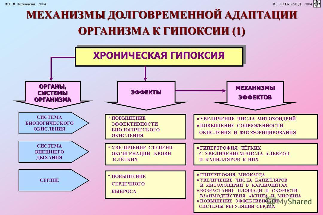 ОРГАНЫ,СИСТЕМЫОРГАНИЗМА * ПОВЫШЕНИЕ ЭФФЕКТИВНОСТИ БИОЛОГИЧЕСКОГО ОКИСЛЕНИЯ * УВЕЛИЧЕНИЕ СТЕПЕНИ ОКСИГЕНАЦИИ КРОВИ В ЛЁГКИХ * ПОВЫШЕНИЕ СЕРДЕЧНОГО ВЫБРОСА УВЕЛИЧЕНИЕ ЧИСЛА МИТОХОНДРИЙ ПОВЫШЕНИЕ СОПРЯЖЕННОСТИ ОКИСЛЕНИЯ И ФОСФОРИЦИРОВАНИЯ ГИПЕРТРОФИЯ МИ