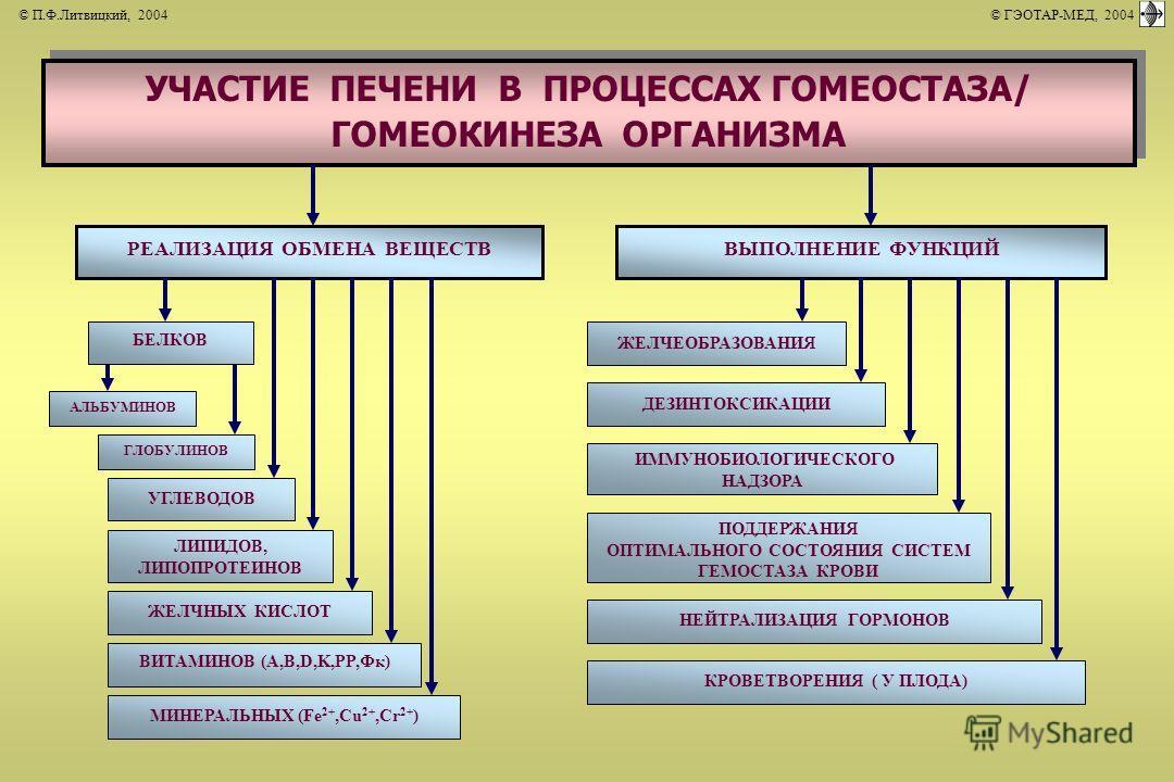 УЧАСТИЕ ПЕЧЕНИ В ПРОЦЕССАХ ГОМЕОСТАЗА/ ГОМЕОКИНЕЗА ОРГАНИЗМА РЕАЛИЗАЦИЯ ОБМЕНА ВЕЩЕСТВВЫПОЛНЕНИЕ ФУНКЦИЙ БЕЛКОВ АЛЬБУМИНОВ ГЛОБУЛИНОВ УГЛЕВОДОВ ЛИПИДОВ, ЛИПОПРОТЕИНОВ ЖЕЛЧНЫХ КИСЛОТ ВИТАМИНОВ (А,В,D,K,PP,Фк) МИНЕРАЛЬНЫХ (Fe 2+,Cu 2+,Cr 2+ ) ПОДДЕРЖАН