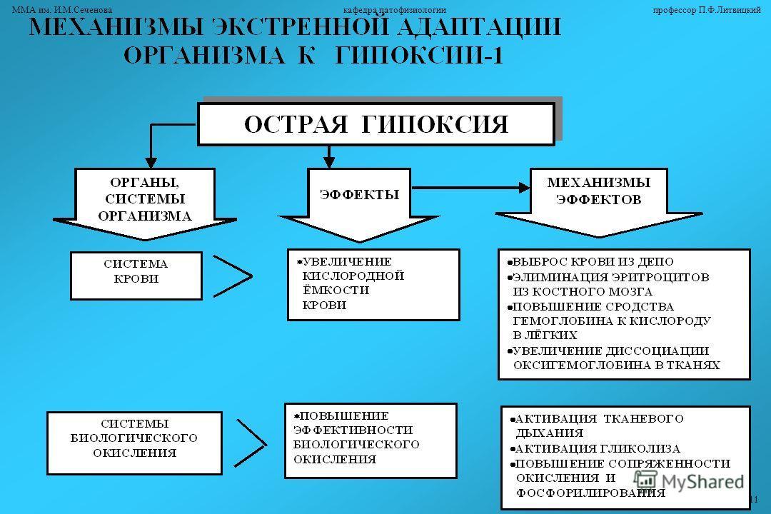 ММА им. И.М.Сеченова кафедра патофизиологии профессор П.Ф.Литвицкий 11