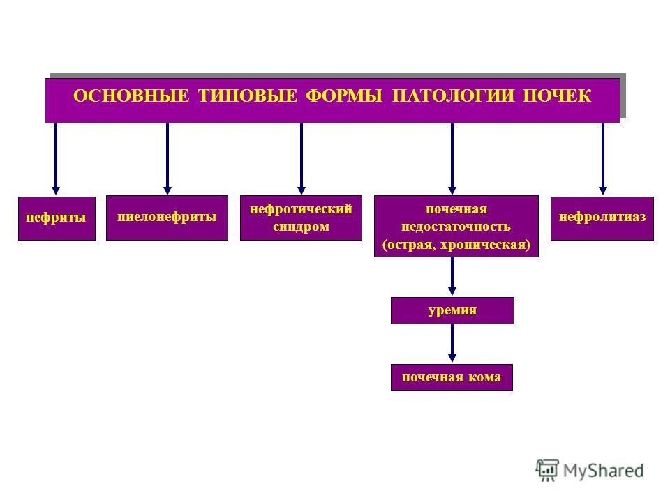 ОСНОВНЫЕ ТИПОВЫЕ ФОРМЫ ПАТОЛОГИИ ПОЧЕК пиелонефриты нефриты нефролитиаз почечная недостаточность (острая, хроническая) нефротический синдром уремияпочечная кома
