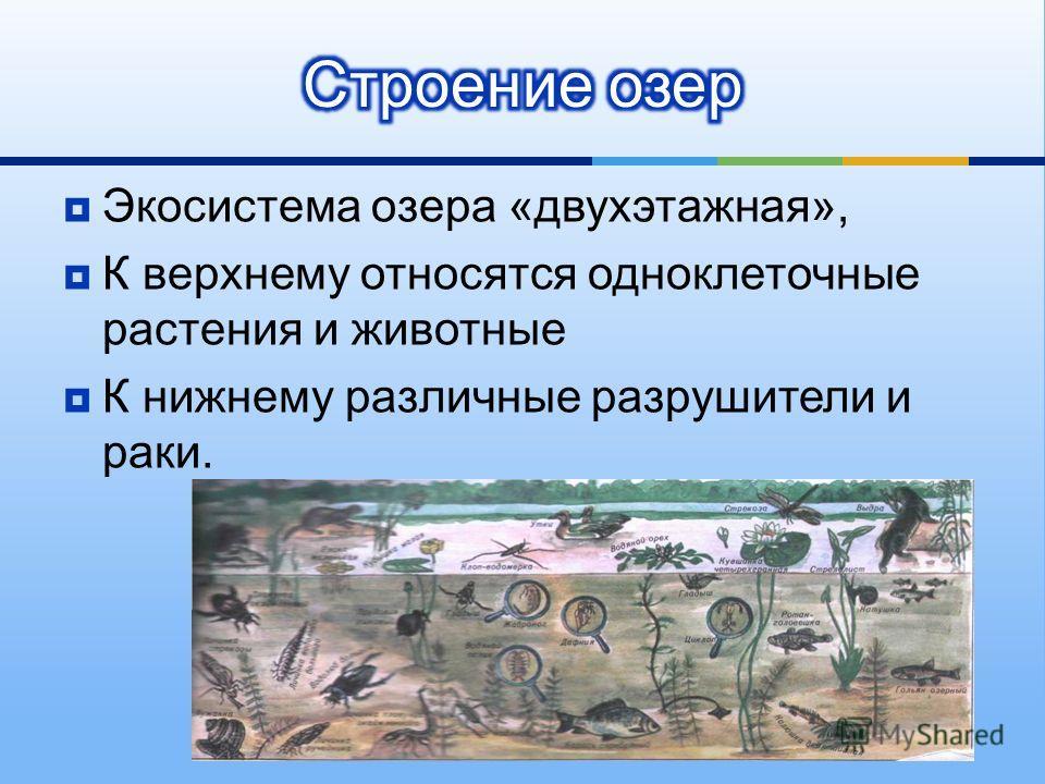 Экосистема озера « двухэтажная », К верхнему относятся одноклеточные растения и животные К нижнему различные разрушители и раки.