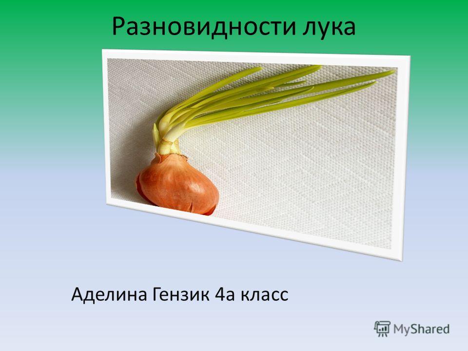 Разновидности лука Аделина Гензик 4а класс