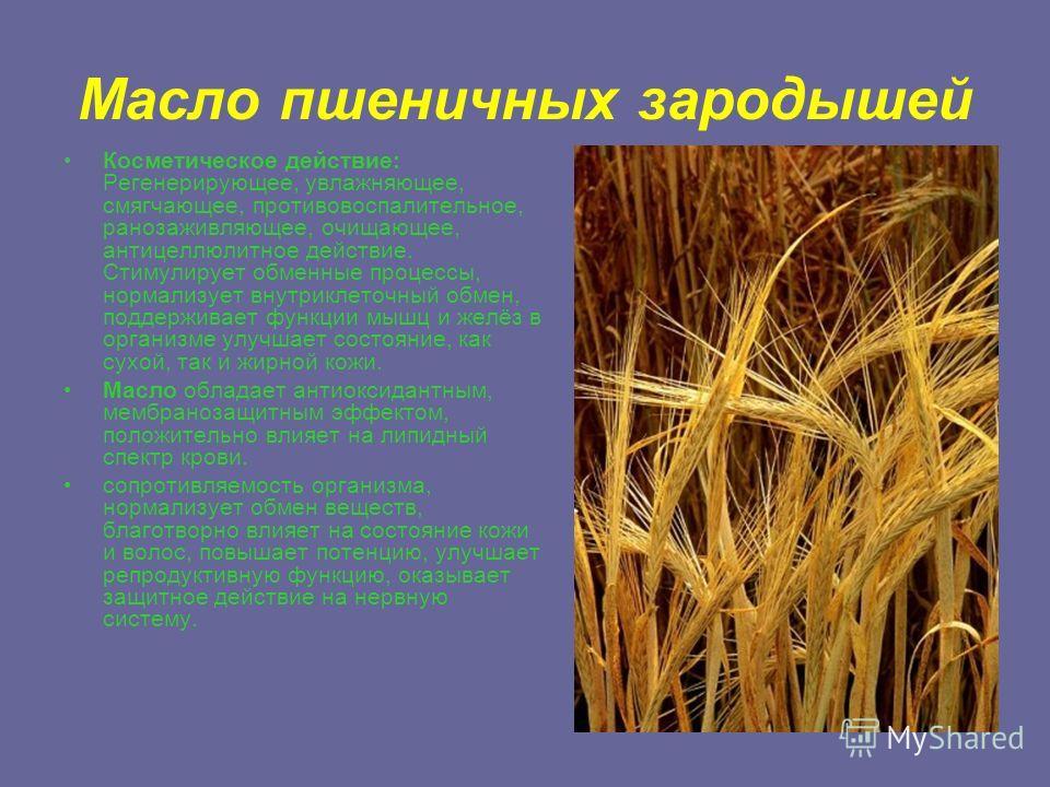 Масло пшеничных зародышей Косметическое действие: Регенерирующее, увлажняющее, смягчающее, противовоспалительное, ранозаживляющее, очищающее, антицеллюлитное действие. Стимулирует обменные процессы, нормализует внутриклеточный обмен, поддерживает фун