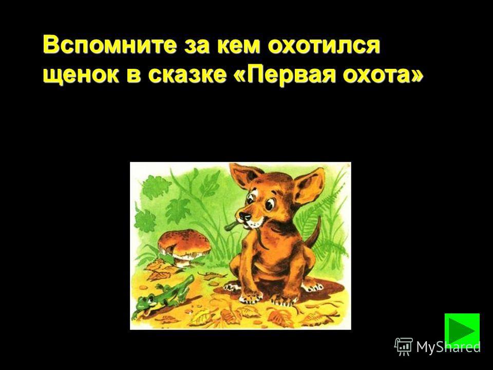 Вспомните за кем охотился щенок в сказке «Первая охота»