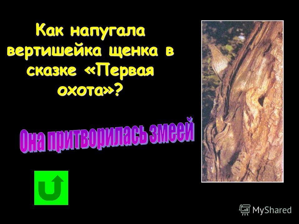 Как напугала вертишейка щенка в сказке «Первая охота»?