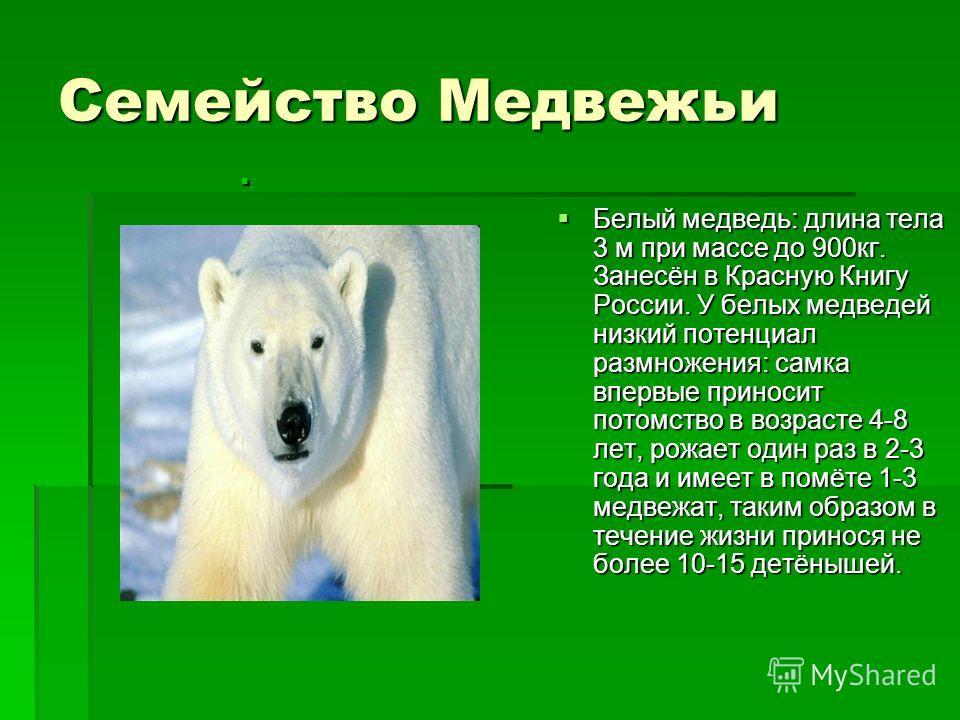 Семейство Медвежьи Белый медведь: длина тела 3 м при массе до 900кг. Занесён в Красную Книгу России. У белых медведей низкий потенциал размножения: самка впервые приносит потомство в возрасте 4-8 лет, рожает один раз в 2-3 года и имеет в помёте 1-3 м
