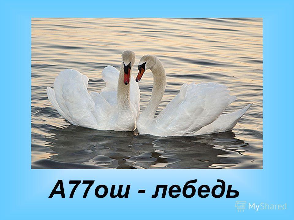 А77ош - лебедь