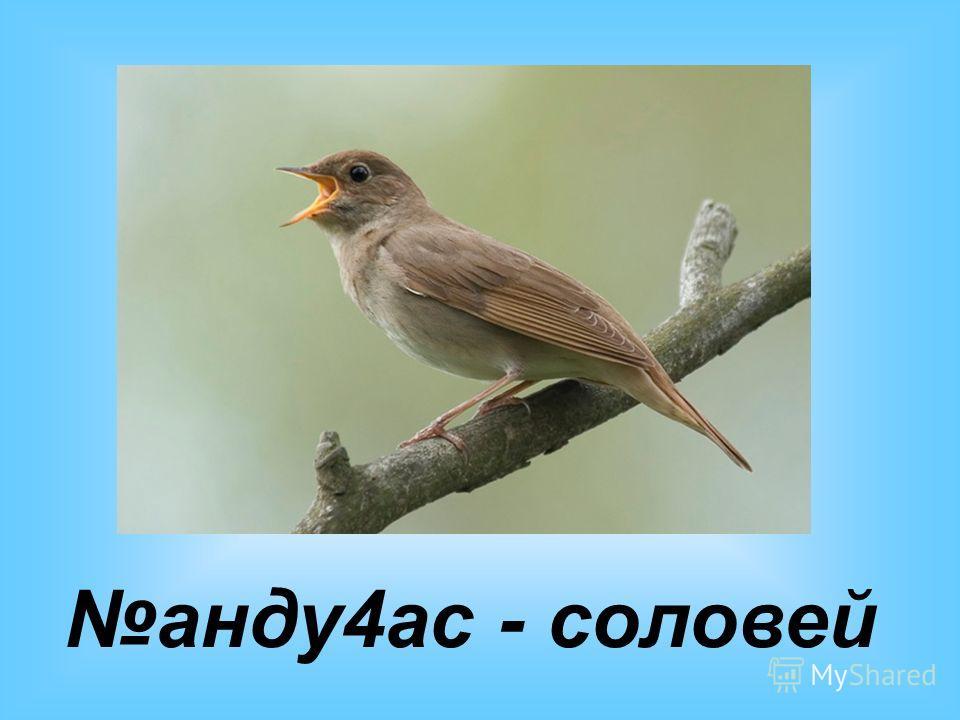 анду4ас - соловей