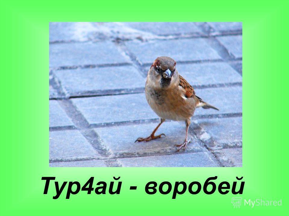 Тур4ай - воробей
