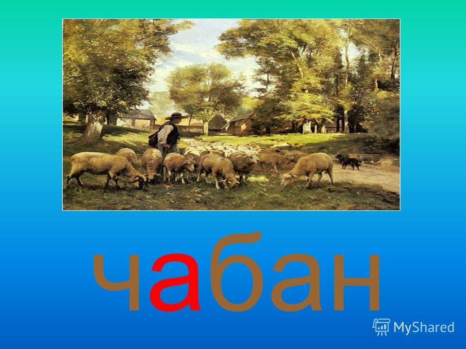 чабан